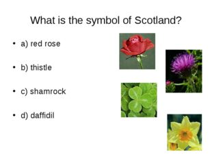 What is the symbol of Scotland? a) red rose b) thistle c) shamrock d) daffidil