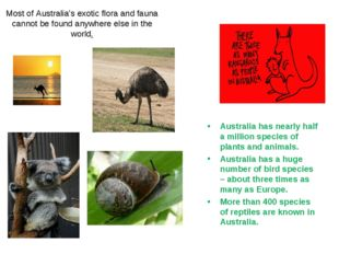 Most of Australia's exotic flora and fauna cannot be found anywhere else in t