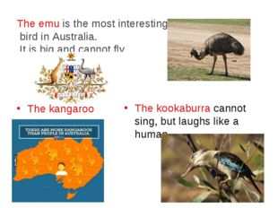 The emu is the most interesting bird in Australia. It is big and cannot fly.
