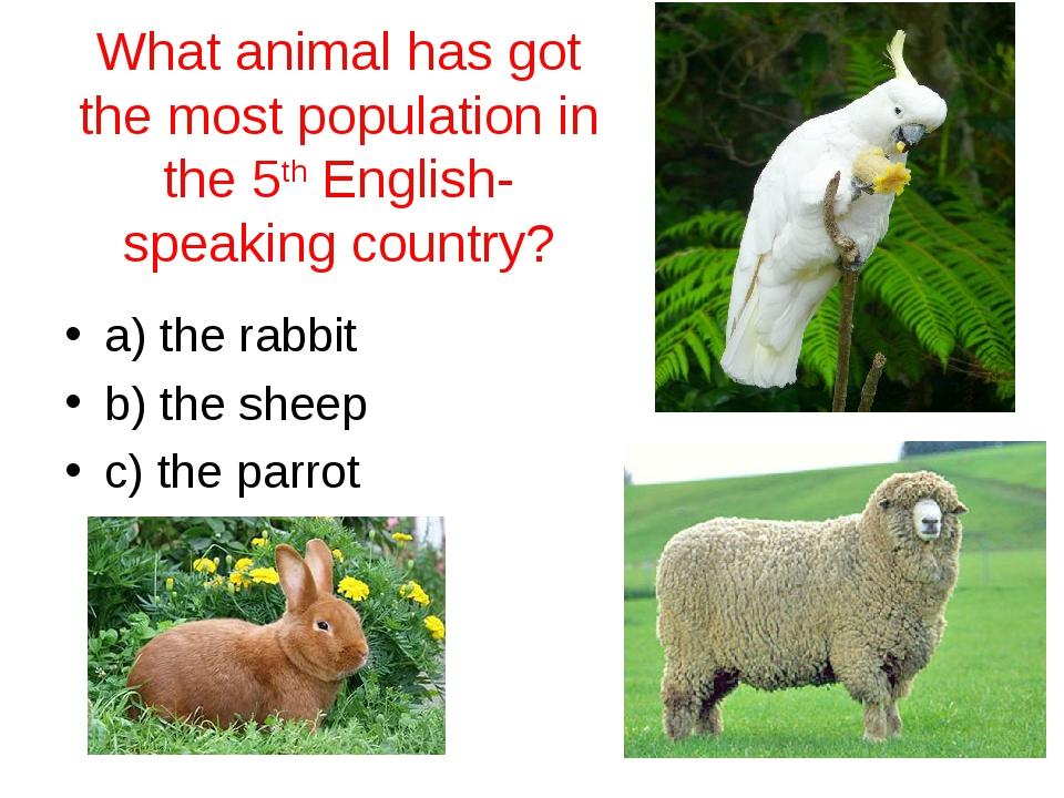 What animal has got the most population in the 5th English-speaking country?...