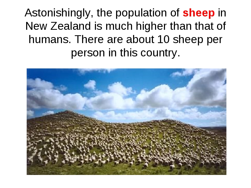Astonishingly, the population of sheep in New Zealand is much higher than tha...