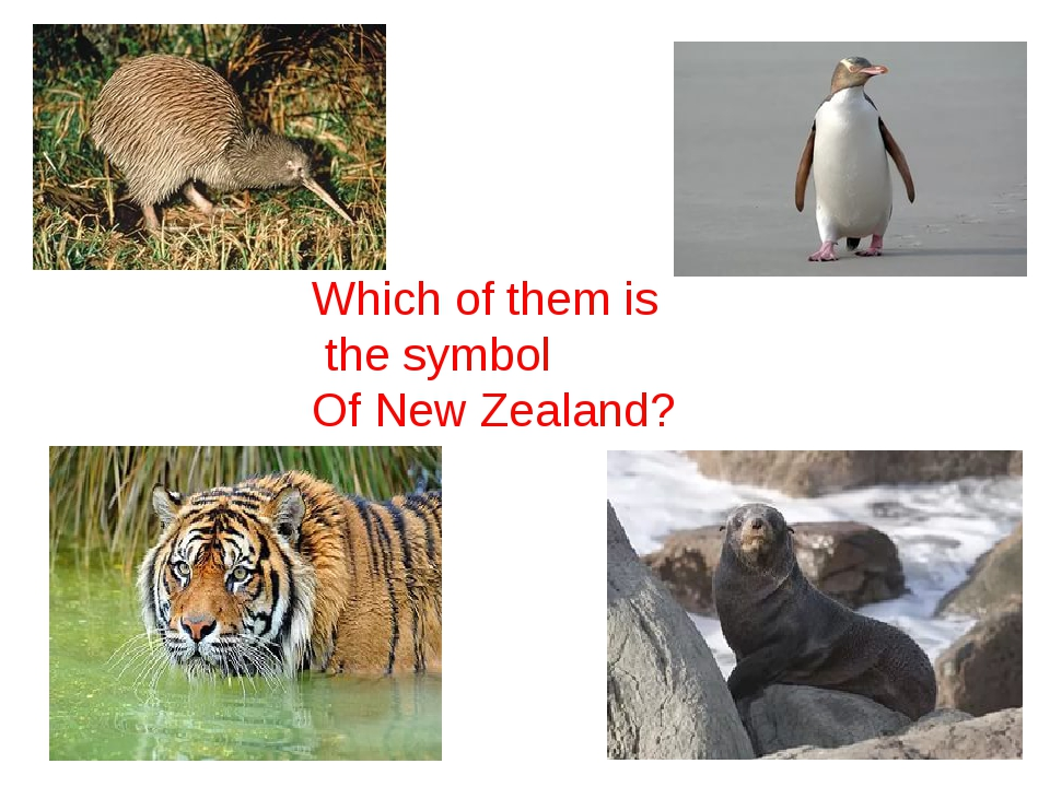 Which of them is the symbol Of New Zealand?