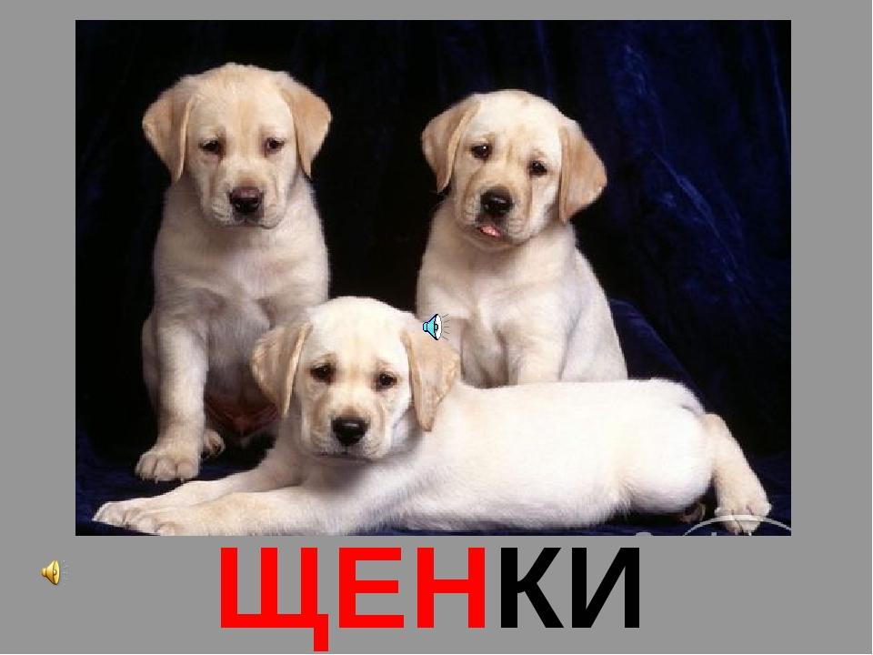 ЩЕНКИ