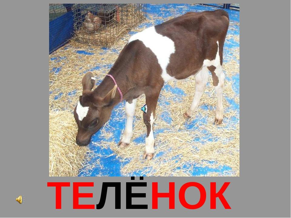ТЕЛЁНОК