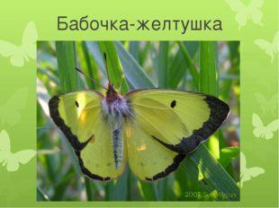 Бабочка-желтушка