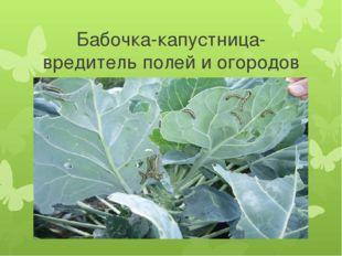 Бабочка-капустница-вредитель полей и огородов