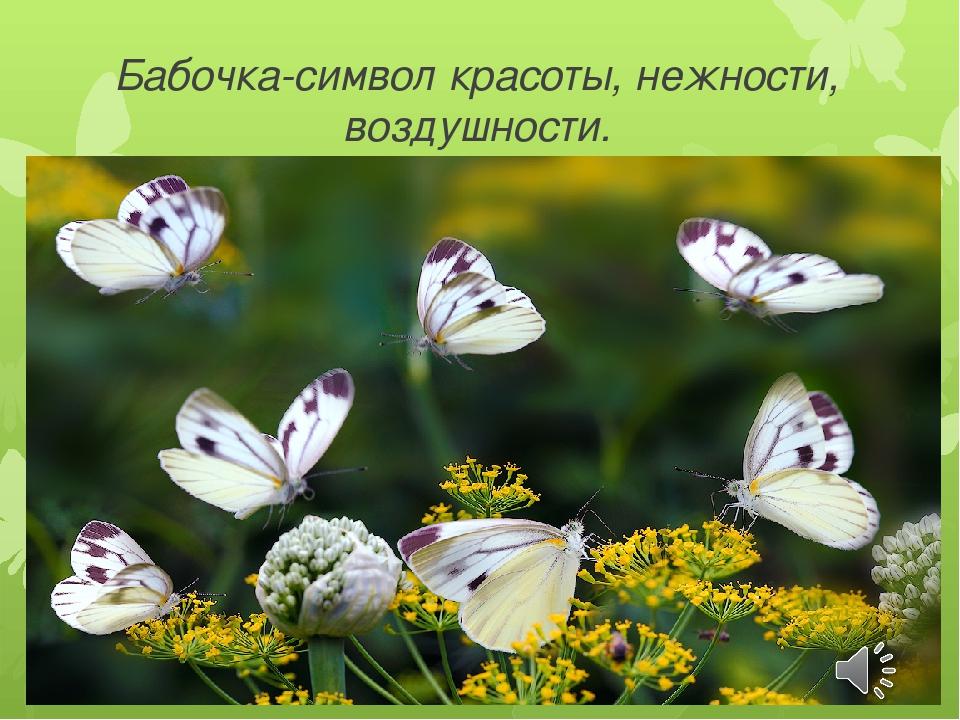 Бабочка-символ красоты, нежности, воздушности.