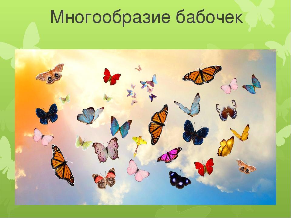 Многообразие бабочек