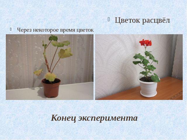 Конец эксперимента Через некоторое время цветок погиб. Цветок расцвёл