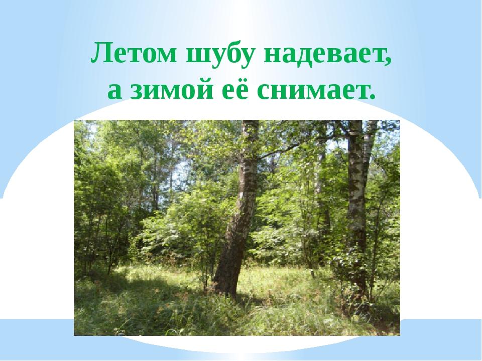 Летом шубу надевает, а зимой её снимает.
