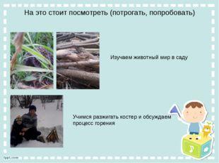 На это стоит посмотреть (потрогать, попробовать) Изучаем животный мир в саду