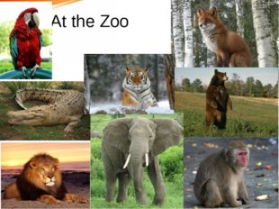 At the Zoo В начало Далее Назад X