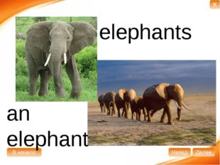 an elephant elephants В начало Далее Назад X