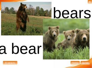 a bear bears В начало Далее Назад X