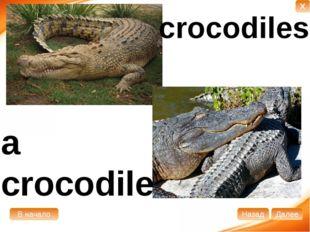 a crocodile crocodiles В начало Далее Назад X