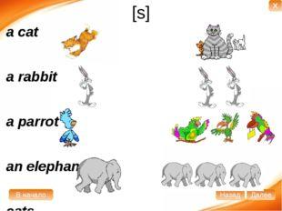 [s] a cat a rabbit a parrot an elephant cats rabbits parrots elephants В нача