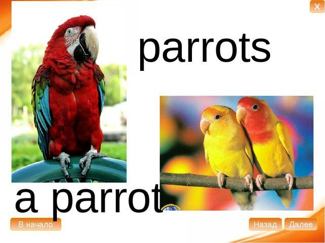 a parrot parrots В начало Далее Назад X
