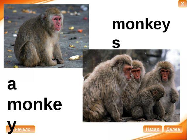 a monkey monkeys В начало Далее Назад X