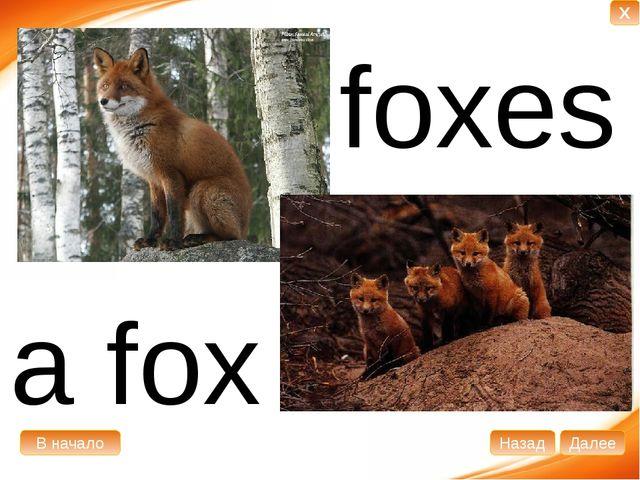 a fox foxes В начало Далее Назад X