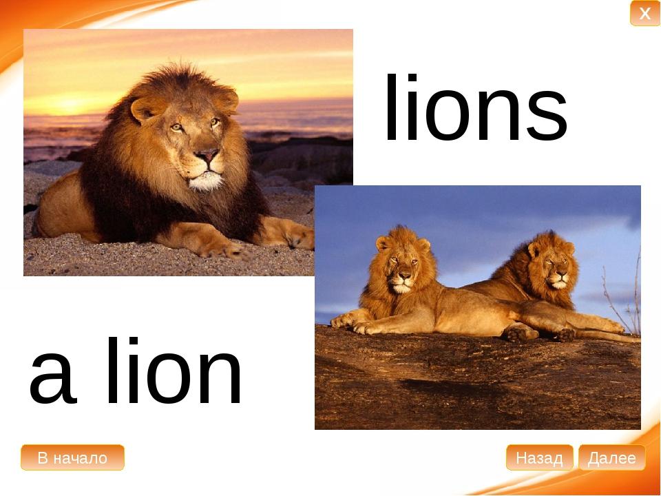 a lion lions В начало Далее Назад X