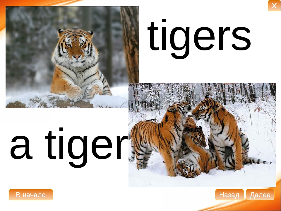 a tiger tigers В начало Далее Назад X