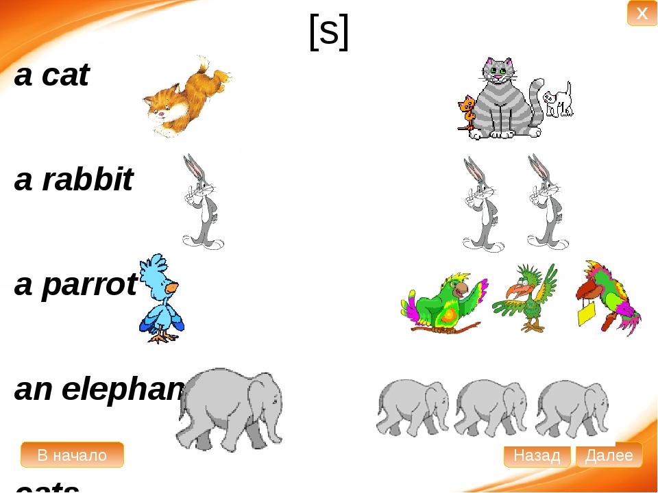 [s] a cat a rabbit a parrot an elephant cats rabbits parrots elephants В нача...
