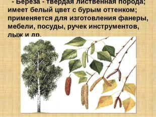 - Береза - твердая лиственная порода; имеет белый цвет с бурым оттенком; прим