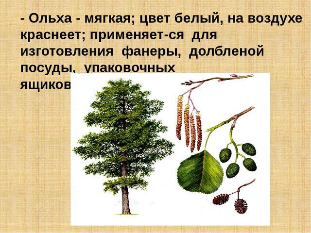 - Ольха - мягкая; цвет белый, на воздухе краснеет; применяется для изготовле...