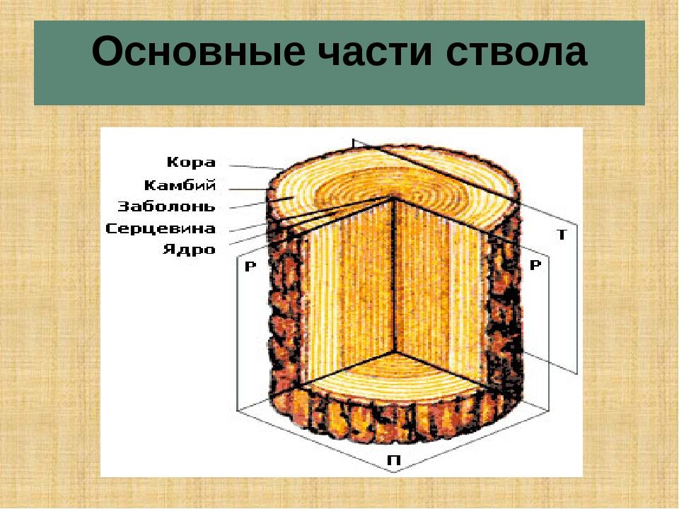 Основные части ствола