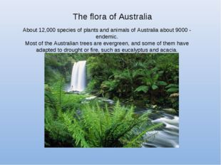 The flora of Australia About 12,000 species of plants and animals of Australi