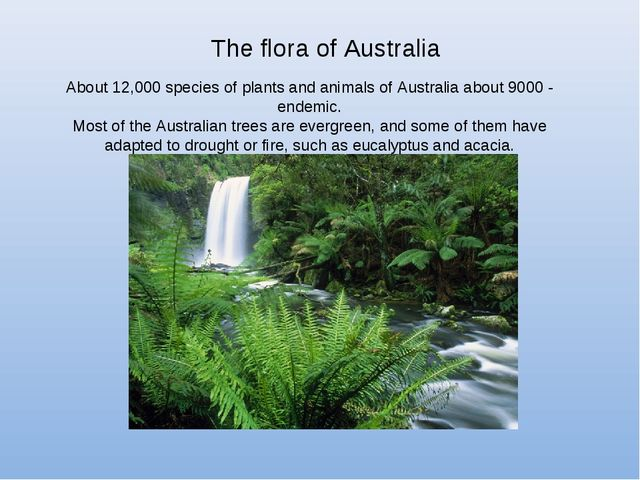 The flora of Australia About 12,000 species of plants and animals of Australi...