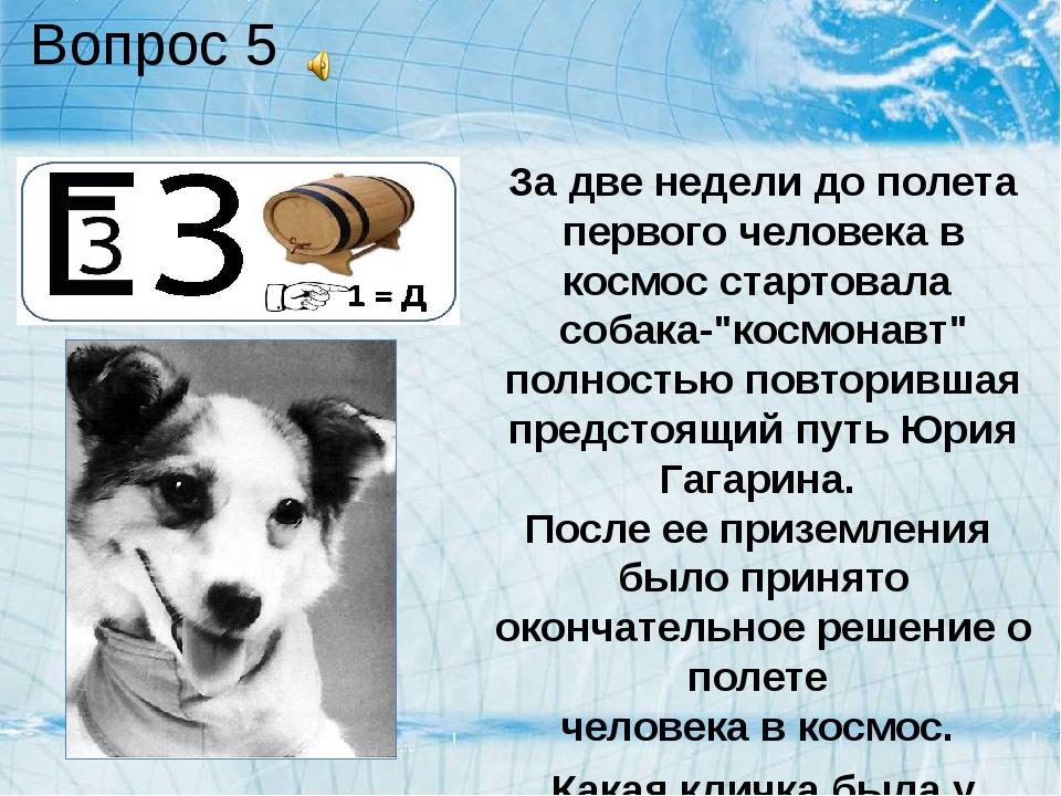 Вопрос 5 За две недели до полета первого человека в космос стартовала собака-...