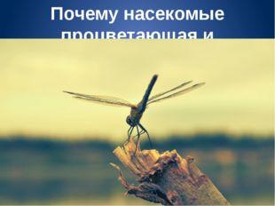 Почему насекомые процветающая и прогрессирующая группа животных?
