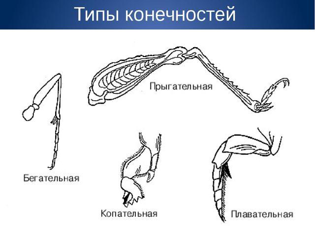 Типы конечностей
