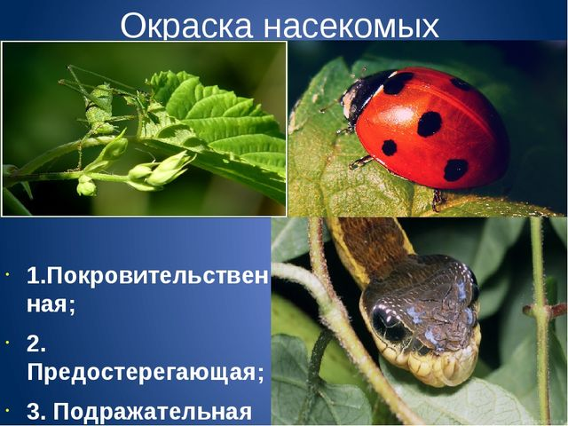 Окраска насекомых 1.Покровительственная; 2. Предостерегающая; 3. Подражательн...