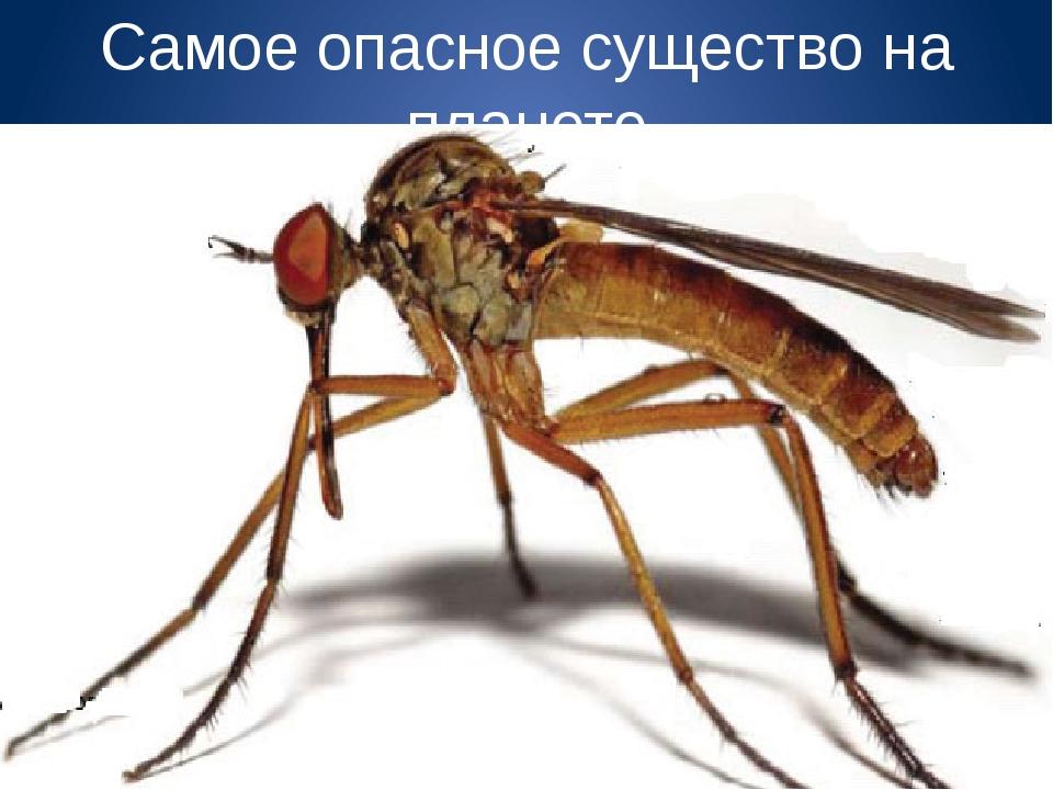 Самое опасное существо на планете