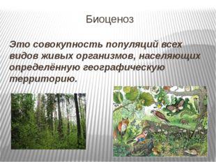 Биоценоз Это совокупность популяций всех видов живых организмов, населяющих о