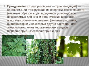 Продуценты(от лат. producens — производящий) — организмы, синтезирующие из н