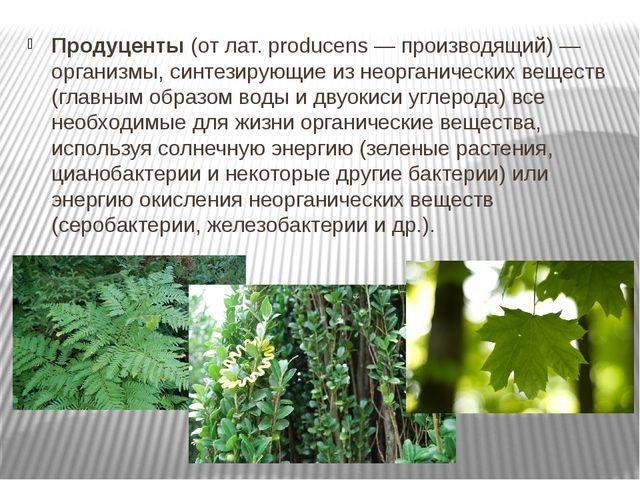 Продуценты(от лат. producens — производящий) — организмы, синтезирующие из н...