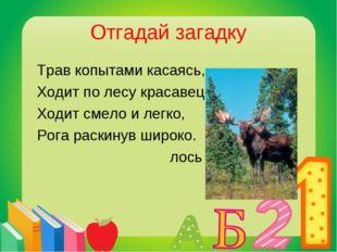 Отгадай загадку Трав копытами касаясь, Ходит по лесу красавец. Ходит смело и