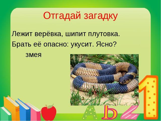 Отгадай загадку Лежит верёвка, шипит плутовка. Брать её опасно: укусит. Ясно?...