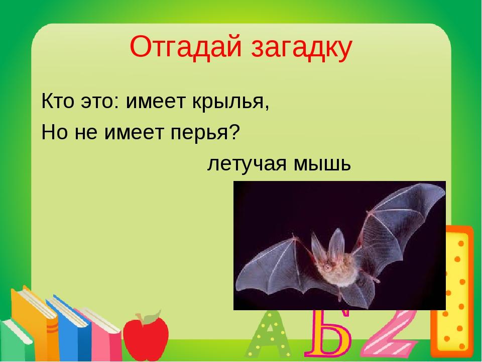 Отгадай загадку Кто это: имеет крылья, Но не имеет перья? летучая мышь