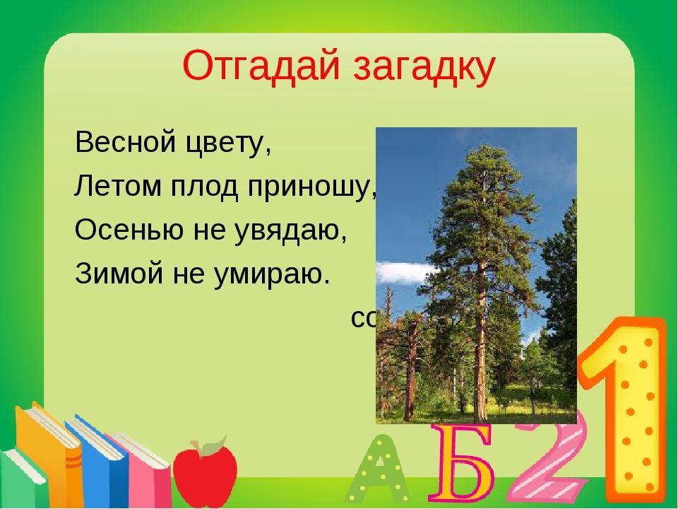 Отгадай загадку Весной цвету, Летом плод приношу, Осенью не увядаю, Зимой не...