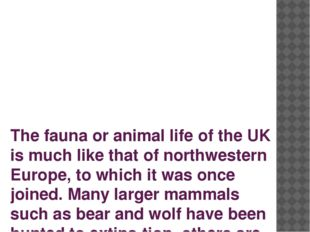 The fauna or animal life of the UK is much like that of northwestern Europe,