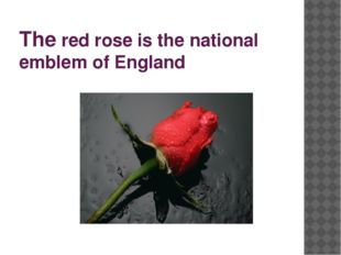 The red rose is the national emblem of England