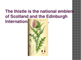 The thistle is the national emblem of Scotland and the Edinburgh Internationa