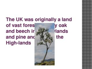 The UK was originally a land of vast forests, mainly oak and beech in the Low