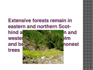 Extensive forests remain in eastern and northern Scot-hind and in southeaster