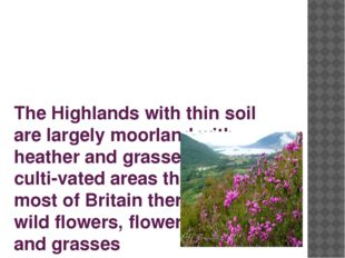 The Highlands with thin soil are largely moorland with heather and grasses. I