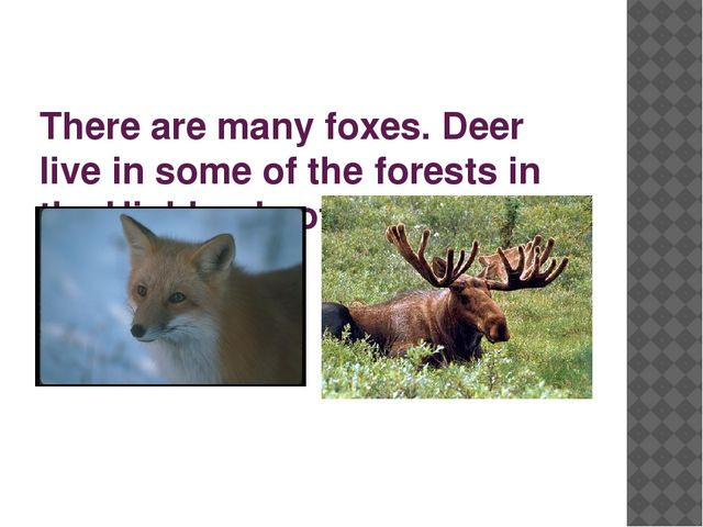There are many foxes. Deer live in some of the forests in the Highlands of Sc...